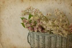 - Beyaz Çiçekler Kanvas Tablo