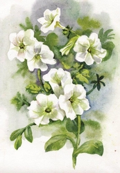 - Beyaz Çiçeler Kanvas Tablo
