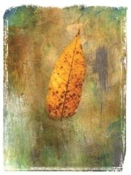 - Kahverengi Yaprak Kanvas Tablo