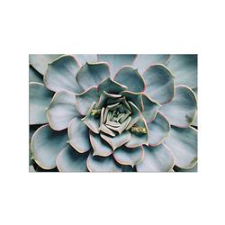 - Lotus Yaprakları Kanvas Tablo