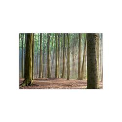 - Ormanda Ağaçlar Kanvas Tablo