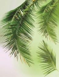 - Palmiye Yaprakları Kanvas Tablo