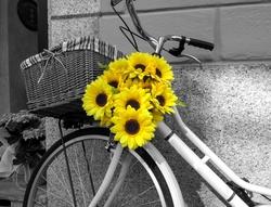 - Papatyalar ve Bisiklet Kanvas Tablo