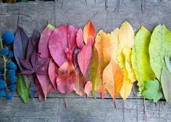 - Renkli Yapraklar Ahşap Tablo