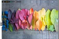 - Renkli Yapraklar Kanvas Tablo