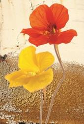 - Sarı Turuncu Çiçek Kanvas Tablo